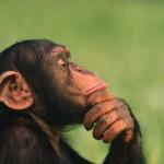 Wetenschap ontwikkelt reclame voor apen!