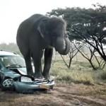Schrikken olifanten nou echt van muizen? Bij de Allsecur commercial wel!