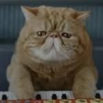 Aandacht op de weg: keyboardspelende kat
