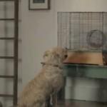 Vriendschap inspireert – Geestige nieuwe reclame van eBay