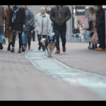 Hond laat zichzelf uit Youtube volkswagen