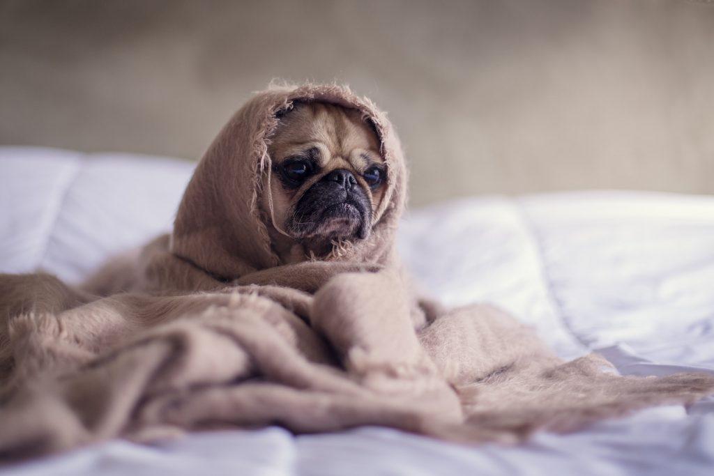 ziek hondje